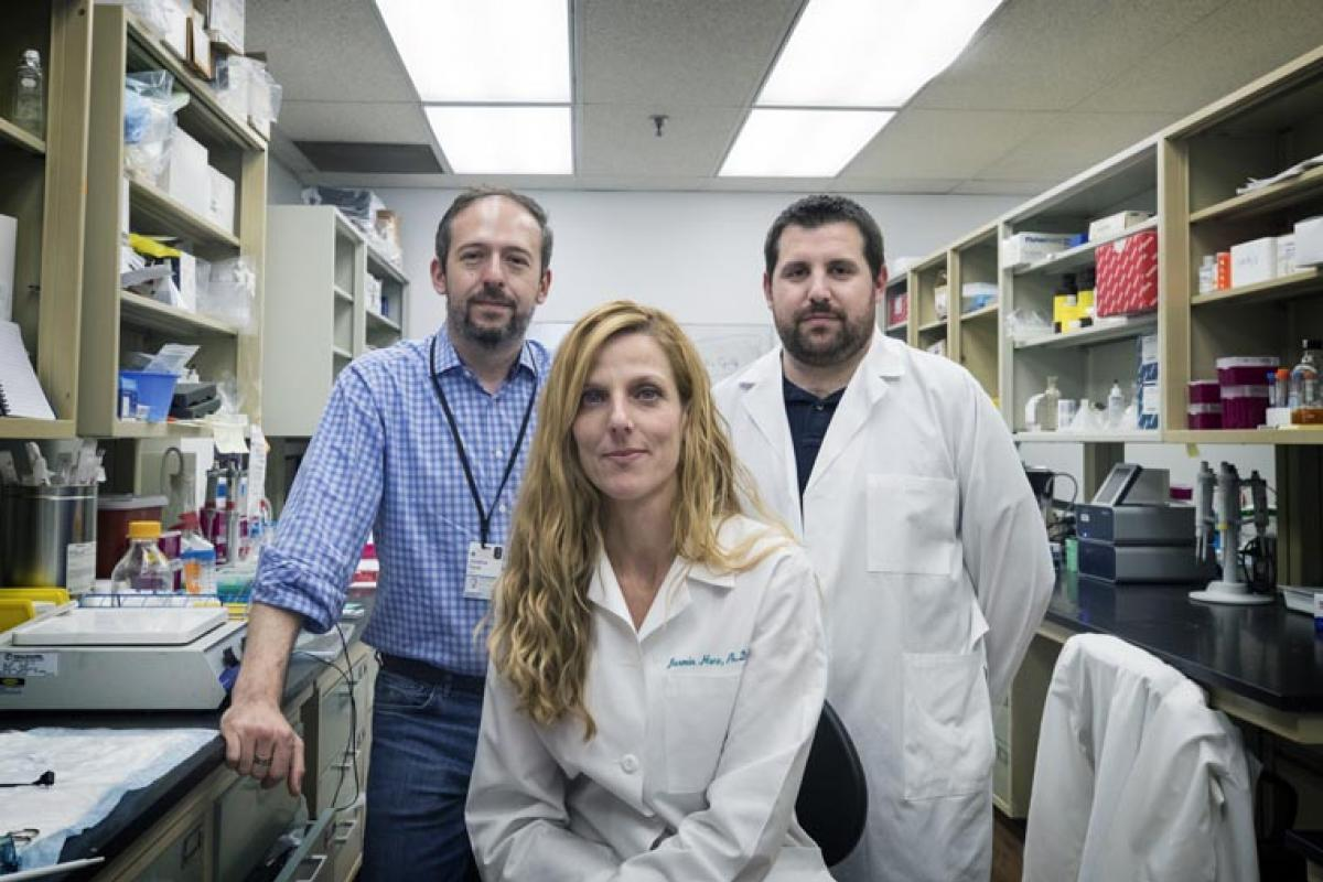 Researchers Jonathan Kipnis (from left), Jasmin Herz and Antoine Louveau of UVA's Department of Neuroscience and its Center for Brain Immunology and Glia (BIG).